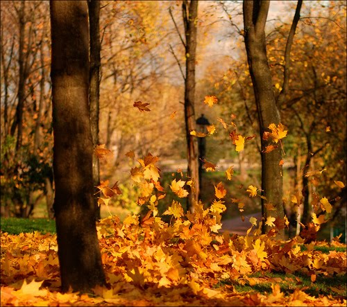 Floating Leaves, Madison, Wisconsin