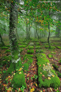 Ancient Road, Basque Country, Spain